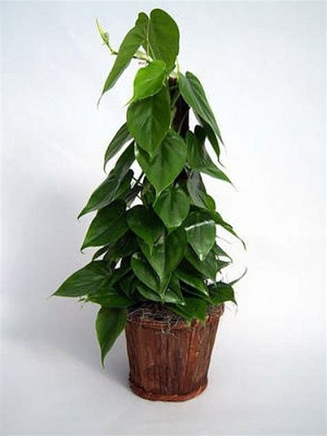 easy houseplants easy low light houseplants for indoor decor 52 decomg