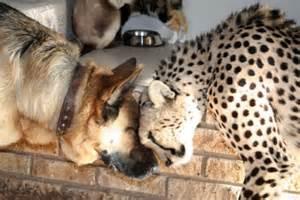 Best Sofa For Cats Pet Cheetah 1funny Com