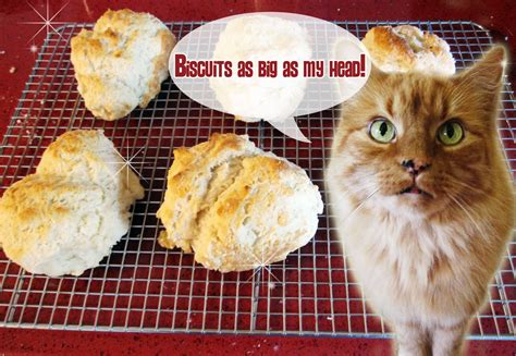 Golden Pantry Biscuits by Let S Make Some Different Biscuits