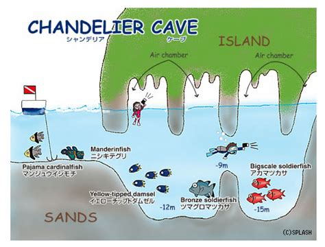 The Chandelier Belleville Map Chandelier Cave Splash Palau Dive Center