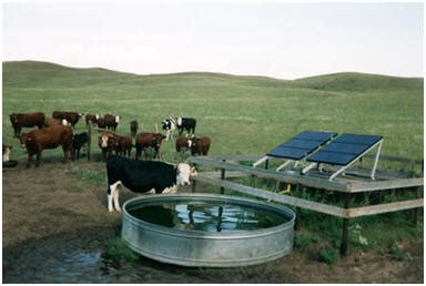 livestock and solar panels rangelands energy nrcs new jersey