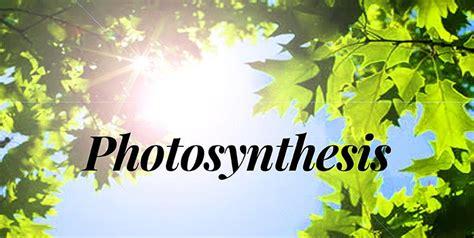 photosynthesis work indoor garden plantui