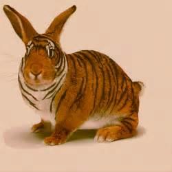 hase le bengalischer hase der bengalische hase lepus tigris