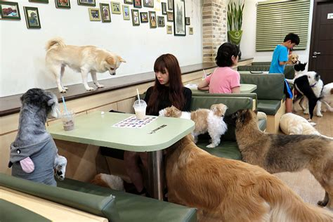 the dog house cafe the dog cafe aims to be first of its kind in america daily trojan