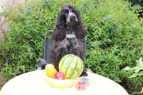 strawberries ok for dogs fruit that s safe for dogs woofwagwalk