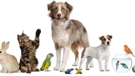 alimenti per animali negozi pet shop cerca il negozio pet pi 249 vicino a te