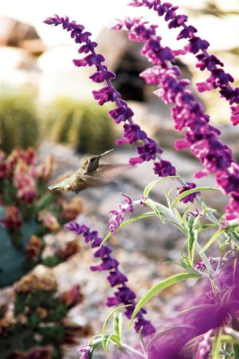 easy care flowering shrubs 13 easy care plants hgtv