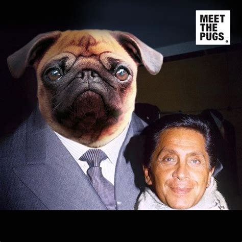 valentino and his pugs 17 best images about pugs and their on rob my boys and