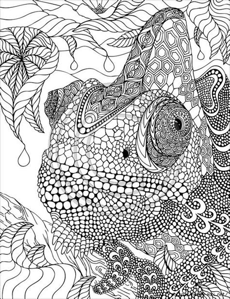 coloring pages for adults chameleon 1121622c7ef5006e3e2b17cdce885082 537x700 463kb colour