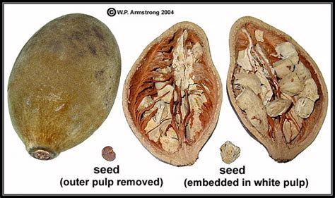 baobab fruit baobab seed is food from home cassava baobab fruit and rice a hungry