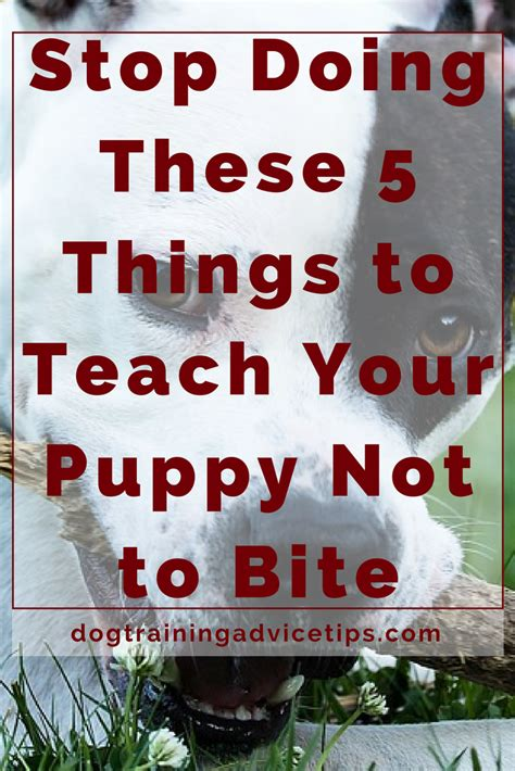 how to your not to bite you stop doing these 5 things to teach your puppy not to bite advice tips