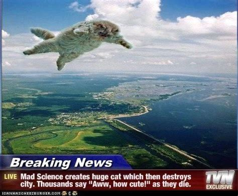 Breaking News Meme - best of breaking news cats haha cat humor cats