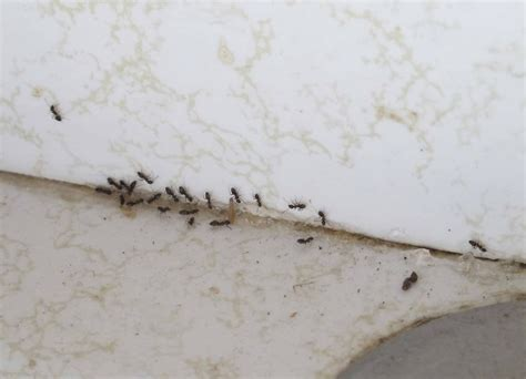 A Slow Day From The Gardens At Laughingstock I Tiny Ants In My Kitchen