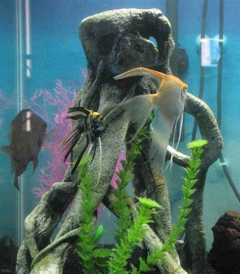 Aquarium Decorations by Top Fin Aquarium Decorations Decor Ideasdecor Ideas
