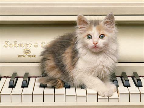 voici des image de chats