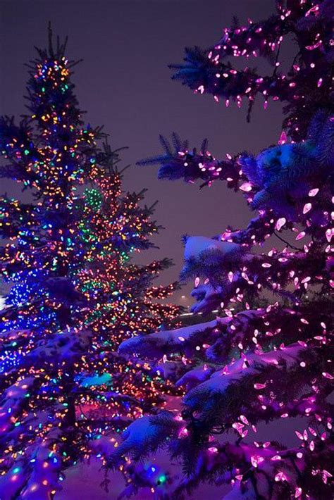 christmas tree lights in snow holiday stuff pinterest