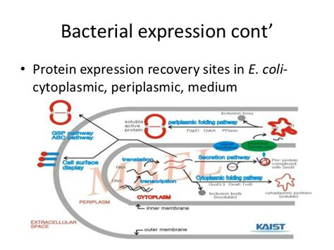 protein expression recombinant protein expression seminar paper