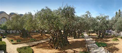 giardino dei getsemani i colori della vita basilica getsemani