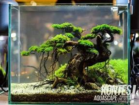 fish tank aquascape designs best 25 nano aquarium ideas on freshwater