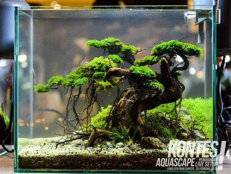 aquascape setup the 25 best ideas about nano aquarium on pinterest