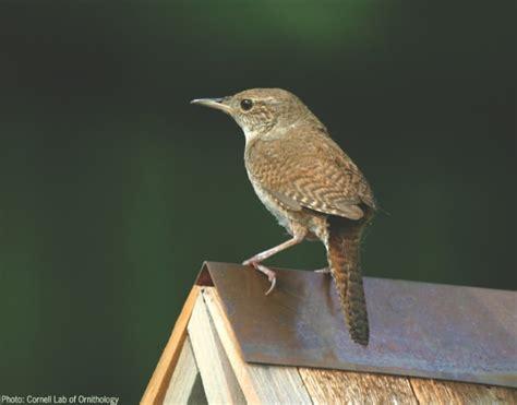 wild birds unlimited little brown bird with long beak