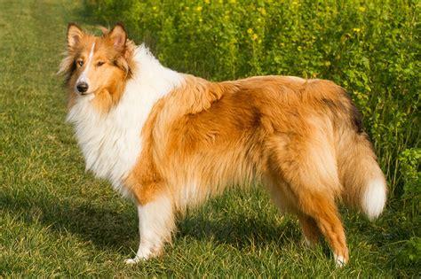 Le Hund fellwechsel darum haben hunde sommer und winterfell