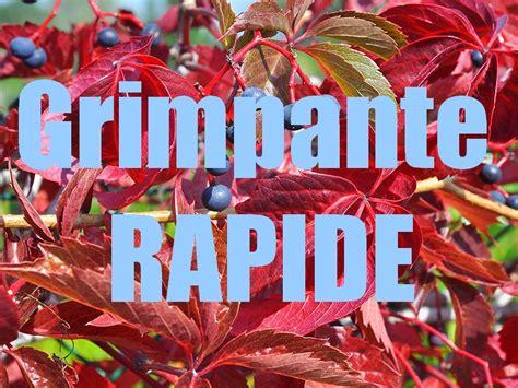 Plante Grimpante Qui Pousse Vite by Plante Grimpante Rapide Et Simple Sans Entretien