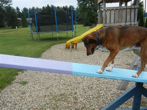 puppy agility agility images mosesagility hd wallpaper and background photos 22965522