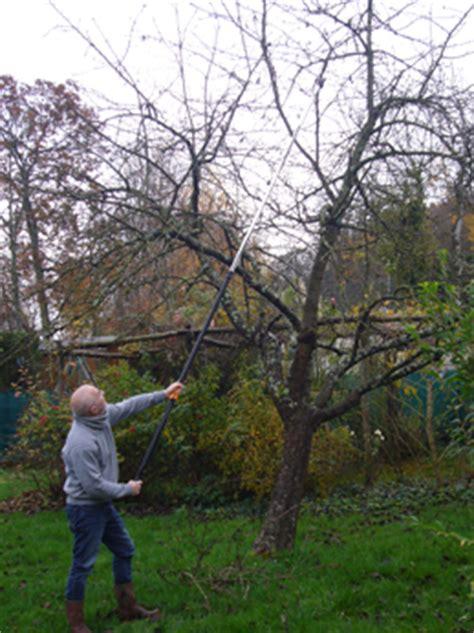 tailler ou 201 laguer un cerisier le du jardinier