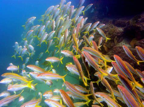imagenes de la vida marina vida marina en los cabos noticias y eventos travel by