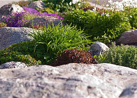Plants For A Rock Garden Rock Garden Plants Decoist