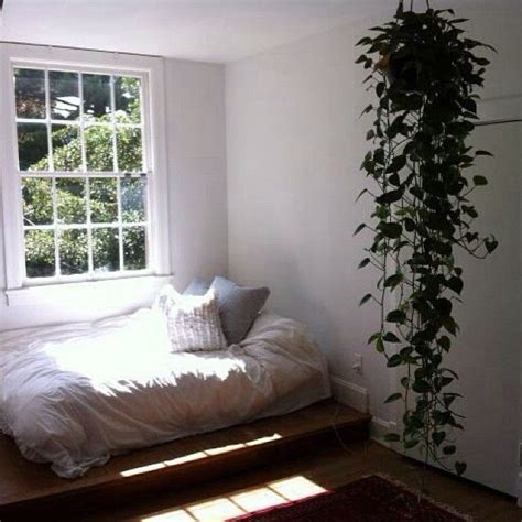 money plant in bedroom 1000 ideas about golden pothos on pinterest house