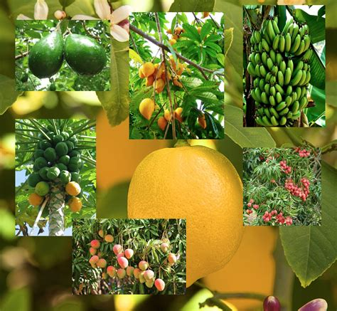 what of fruit grows on trees growing fruit trees food and thought