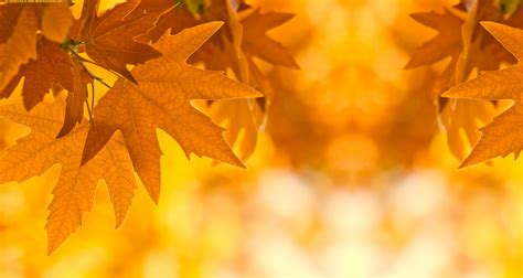Wallpapers For Gt Fall Leaves Desktop Background Hd 8232 Autumn Powerpoint Background