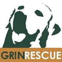grin golden retriever rescue golden retriever rescue grin dogs in our photo