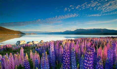 flower wallpaper nz 10 paysages magnifiques de nouvelle z 233 lande easyvoyage
