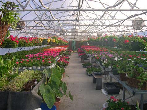 green house life in the greenhouse we change earth s climate beyond weather the water cycle