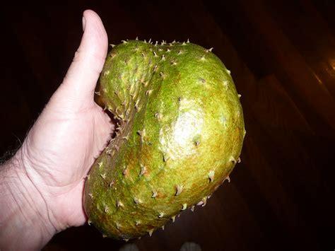graviola tree fruit where to buy forum graviola tree or soursop