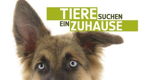 www tiere suchen ein zuhause tiere suchen ein zuhause niemandshunde e v