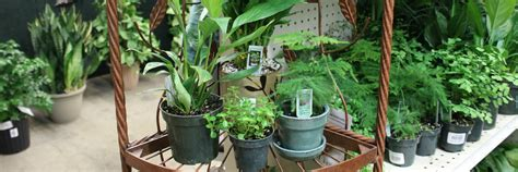 cheap indoor plants 100 cheap indoor plants indoor gardening of