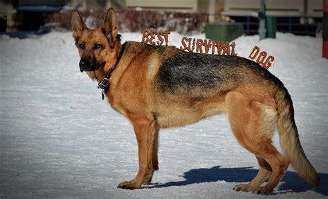 what is the best breed what is the best breed for a survival rogue survivor