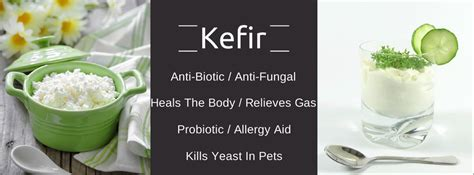 kefir for dogs so yeast hello kefir dogs naturally magazine