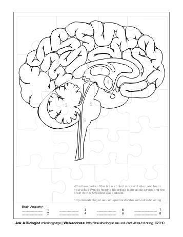 ask a biologist coloring page key ask a biologist ant anatomy activity coloring page