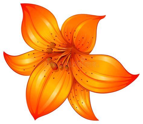 clipart fiore un fiore arancio giglio illustrazione vettoriale