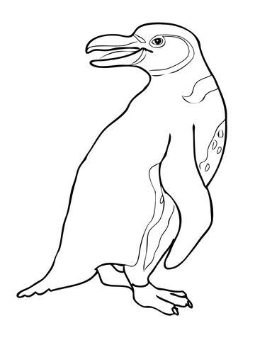 galapagos penguin coloring page galapagos penguin coloring page supercoloring com