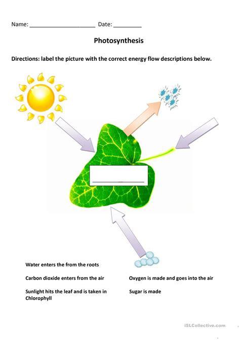 photosynthesis diagrams worksheet photosynthesis diagram worksheet free esl printable