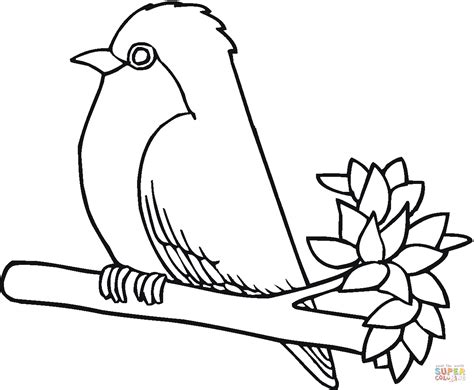 robin printable coloring page robin bird coloring page free printable coloring pages