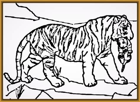 imagenes de tigres faciles para dibujar imagenes de tigres para dibujar a lapiz faciles archivos