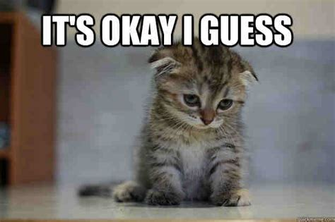 Sad Kitty Meme - 20 really funny memes for when you re not really sure
