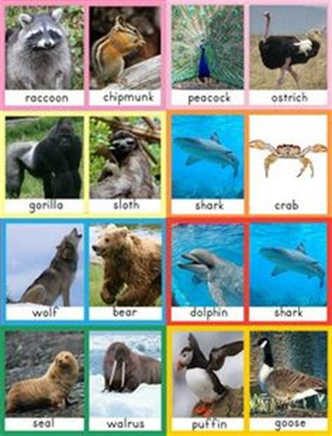 Printable Real Animal Pictures | 1000 images about preschool vocabulary cards on pinterest
